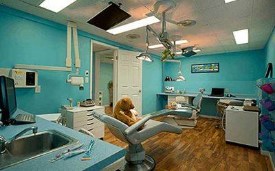 Licensed Dental Hygienist, LDH/RDH – St. Paul, MN